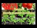 ПИКИРУЕМ рассаду ТОМАТОВ. Секреты и советы по выращиванию рассады