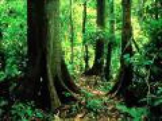Звуки тропического леса
