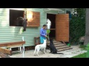 Лучший клип лета-собаки и лошади - The Best Summer video ever-Dogs and Horses