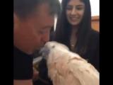 Говорящий попугай   Иди поцелую   Попугай боится