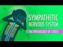 Kids' English | Sympathetic Nervous System: Crash Course A P 14