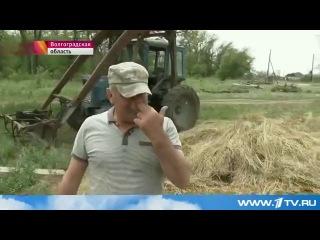Критическая ситуация из-за сильнейшей засухи - в Астраханской и Волгоградской области