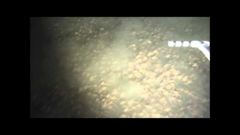 A crab swarm at an ecological hotspot patchiness and population density from AUV observations