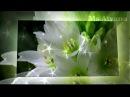 Ретро 50 е - романс Ночные цветы (клип)