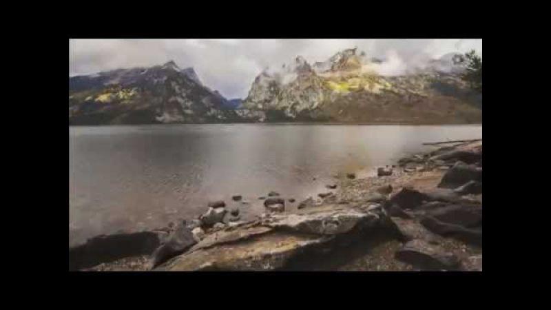 БЕЛЫЕ Волшебные волки первого национального парка Йеллоустона США Вайоминг Монтана и Айдахо