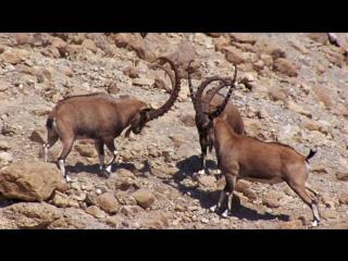 BBC: Планета Земля / Planet Earth (2006) - Пустыни (Deserts) - 5