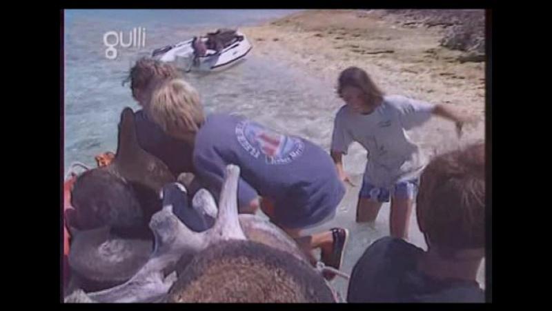 Амазония: приключения молодых морских репортёров / Amazonie: Les indiens Wayanas (1996) Франция Серия - 3