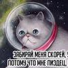 Vasya the Cat