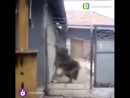 Очень злая собака)))