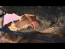 Ап! И Крокодилы у ног моих сели... Ап! ОнЖеГога укротитель Дубайских аллигаторов!