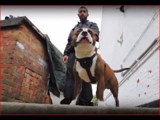 Не вините собаку / Don't Blame the Dog (2012) Серия 2