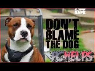 Не вините Собаку / Don't Blame the Dog (2012) Серия 1