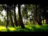 Leaves In The Wind - Ernesto Cortazar