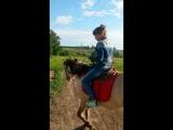 Лошадка,Вперёд,игого