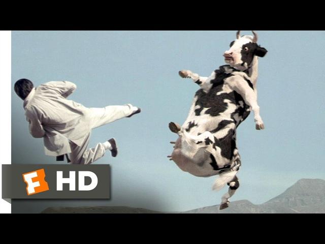 Кунг Фу с коровой