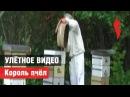 «Улётное видео». Король пчёл