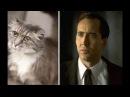 Коты похожие на знаменитых людей