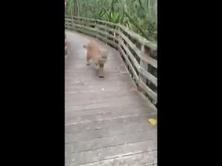 Близкое знакомство с дикой природой (Vine Video)