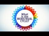 How menstruation works - Emma Bryce
