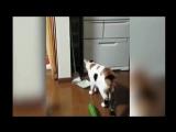 Коты и Страшные Огурцы