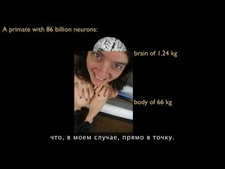 TED Suzana Herculano Houzel_В чем же особенность человеческого мозга