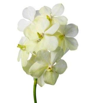 Купить цветы оптом в севастополе