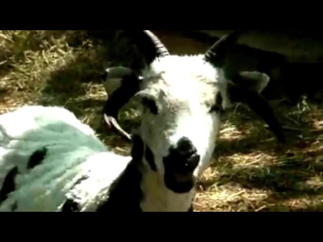 GoatStep