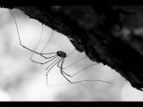 Почему нельзя убивать пауков Что может случиться