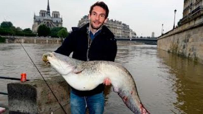 Peixe, gigante, Paris, Rio Sena, Francês fisga peixe enorme em Paris, pescaria em Paris.