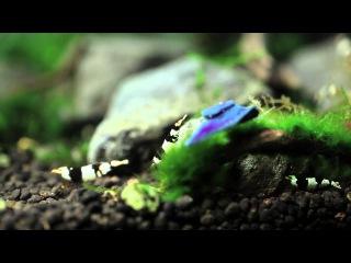 Shrimps Aquarium Layout / Aquascaping Crevettes - Journal Aqua