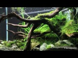 Crevettes CRS Taiwan Bee et CBS Shrimp - Le Journal Aqua