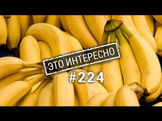 Это интересно: Невероятные факты о бананах. Польза бананов