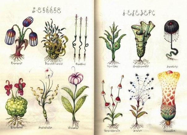Самая странная книга вселенной - Codex Seraphinianus