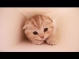 Что делает котёнок в коробке by humordoslez