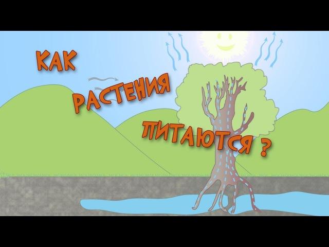 Как растения питаются?