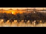 Боевой конь/War Horse (2011) ТВ-ролик №1