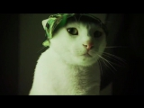 DJ Ashworth – A Meow Mix (Electronic Dance Version)