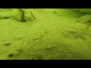 Последние кадры с камеры GoPro, пролежавшей на дне год