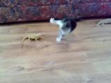 Первая встреча котёнка с игуанами