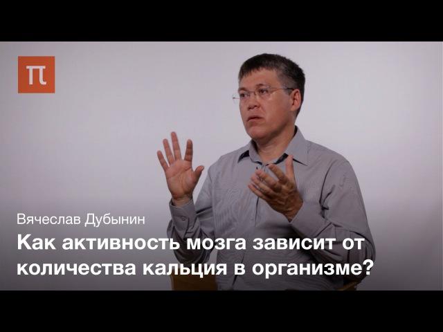 Мозг работа синапсов Вячеслав Дубынин