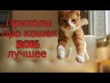 Приколы про кошек. Лучшее за апрель 2016. Грустный кот.