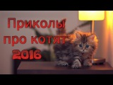 Забавные видео приколы про кошек 2016 до слез. Смех, ржач, угар.