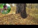 1. Видеоуроки В. Железова №1. Посадка в лесу и в саду. Подвои - подарок от Бога часть 1.