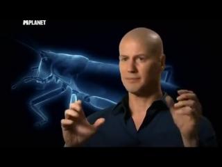 Войны жуков-гигантов Monster bug wars 6 серия
