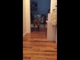 Вы когда-нибудь видели собаку идущую на цыпочках?!