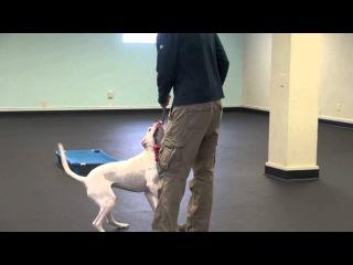 Dog behavior modification training near me