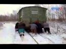 Старики толкают вагон с хлебом 80км от Санкт Петербурга