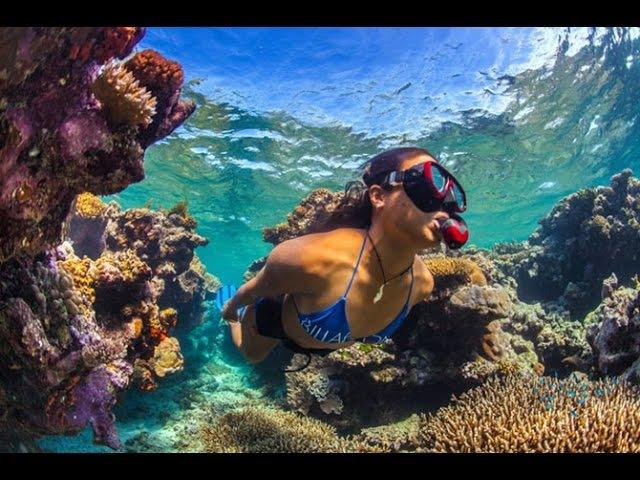 Дикая природа Австралии. Глубины океана. Большой барьерный риф. Документальный ...