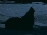 Саша Сирень - Солнце волков