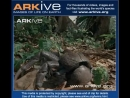 ARKive video 739D5B4A A944 4235 B957 DAD45C70A12D
